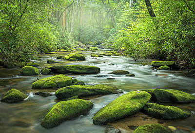 Juan Bosco Forest Animals Royalty Free Images - Streaming...... Royalty-Free Image by Jason Clemmons