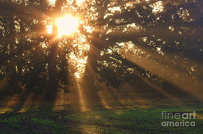 Photograph - Streaming Sun by Erica Hanel