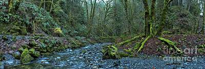Tree Roots Photograph - Streaming Through Goldstream by Adam Jewell