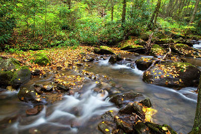 Photograph - Streams In The Forest by Jill Lang