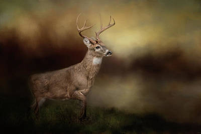 Photograph - Streamside Buck Deer Art by Jai Johnson
