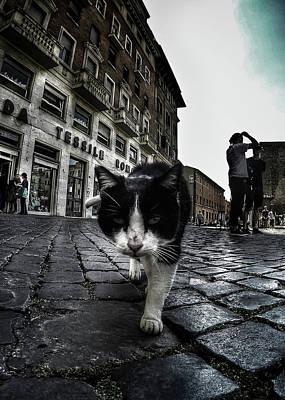 Photograph - Street Cat by Nicklas Gustafsson