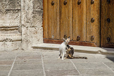 Photograph - Street Cat Outside A Solid Wood Door by Rob Huntley