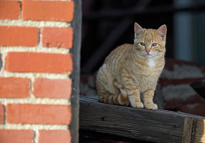 Photograph - Street Cat by Scott Warner