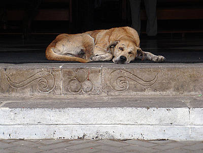 Art Print featuring the photograph Street Dog Sleeping On Steps by Karen Zuk Rosenblatt