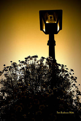 Photograph - Street Lamp by Tom Buchanan