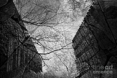 Photograph - Street Scene Buildings And Tree Reflected In Rain Puddle by Jim Corwin