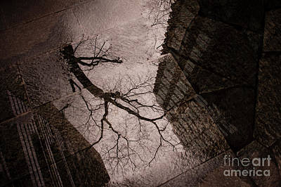 Photograph - Street Scene Tree Reflected In Mud Puddle by Jim Corwin