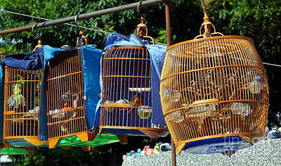 Photograph - Street Vendor Selling Songbirds by Yali Shi