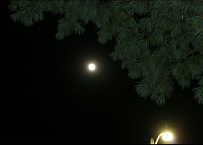 Streetlight Trying To Outshine The Moon Original by ConnieAnn LaPointe