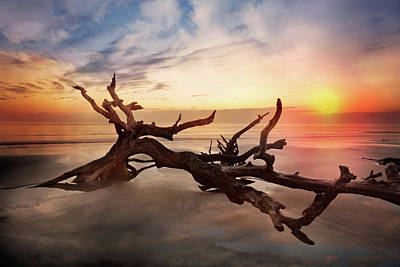 Driftwood Beach Fog Wall Art - Photograph - Stretched Out In The Sun by Debra and Dave Vanderlaan