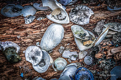 Photograph - Strewn About II by Roxy Hurtubise
