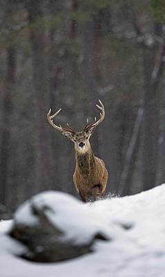 Photograph - Striding Through The Snow by Peter Walkden