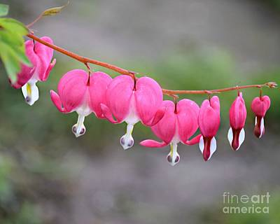 Photograph - String Of Hearts by Kathy M Krause