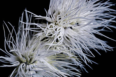 Photograph - Stringing Static by Kathleen Messmer