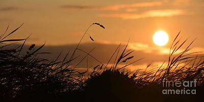 Photograph - Strip Of Silhouetted Grasses by Paul Davenport