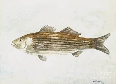 Striped Bass Art Print