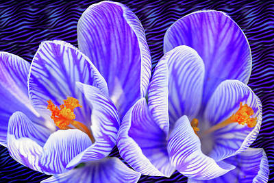 Photograph - Striped Beauties by Carolyn Derstine