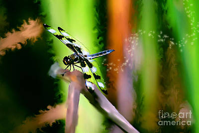 Photograph - Striped Dragonfly by Lisa Redfern