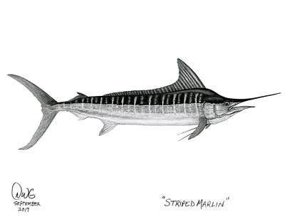Striped Marlin Art Print