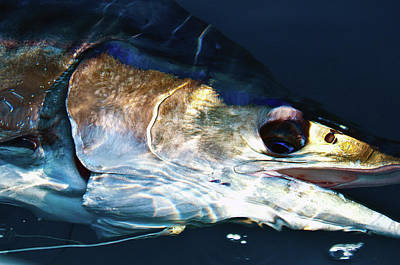 Striped Marlin Art Print