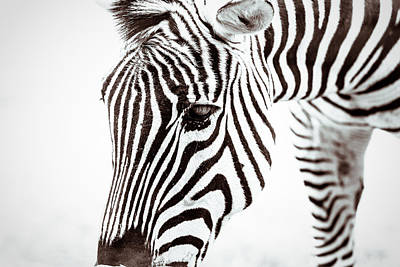 Photograph - Striped by Wade Brooks