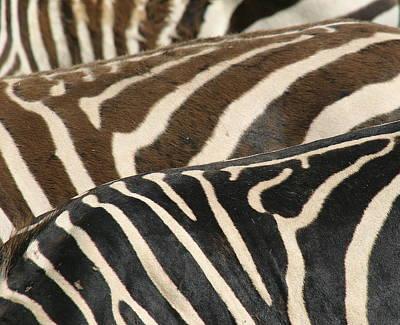 Stripes Art Print by Donald Tusa