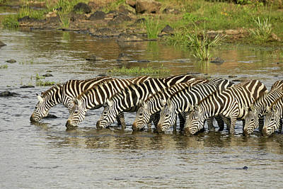 Photograph - Stripes In A Row by Michele Burgess