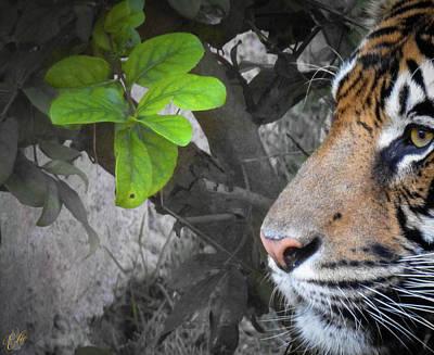 Animals Photos - Stripes, No. 21 by Elie Wolf