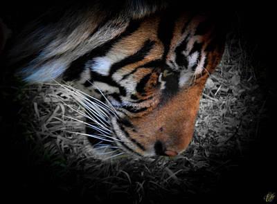 Animals Photos - Stripes, No. 25 by Elie Wolf