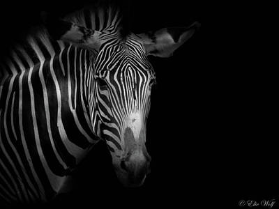 Photograph - Stripes Number 5 by Elie Wolf