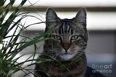 Photograph - Stripes On Stripes Cat In Grasses by Rose De Dan