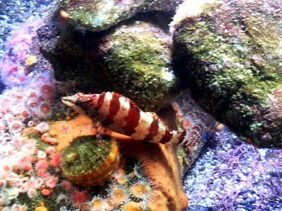 Wall Art - Photograph - Stripey Fish by Helen Krummenacker