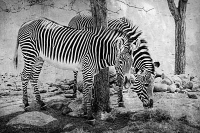 Photograph - Stripped Pair by Jeff Swanson