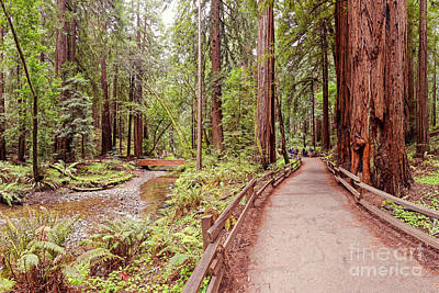 Golden Gate Bridge Photograph - Strolling Along Redwood Creek At Muir Woods National Monument - Mill Valley Marin County California by Silvio Ligutti
