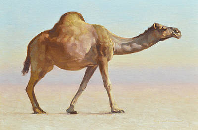 Camel Wall Art - Painting - Strolling by Ben Hubbard