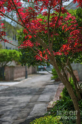 Photograph - Strolling Charleston Back Alleys In The Spring by Dale Powell