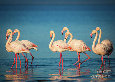 Photograph - Strolling Flamingos by Inge Johnsson