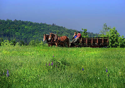 Photograph - Strolling In Fields At Sugar Hill New Hampshire by Nancy Griswold