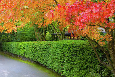Wall Art - Photograph - Strolling Path Lined With Japanese Maple Trees In Fall by David Gn