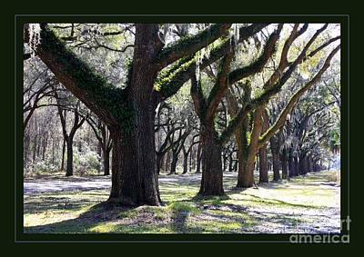 Photograph - Strong And Proud In The South With Border by Carol Groenen