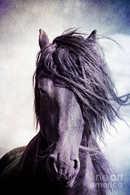 Strong Friesian Stallion Art Print by Jan Brons