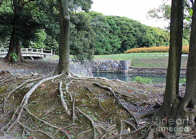 Tree Roots Photograph - Strong Roots In Japan by Carol Groenen