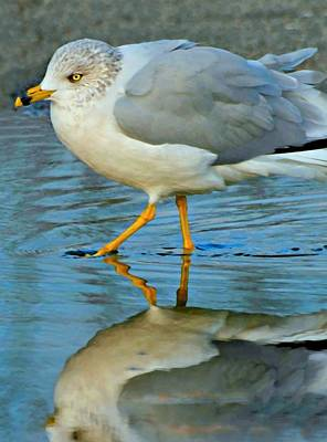 Photograph - Strutting His Stuff by Diana Angstadt