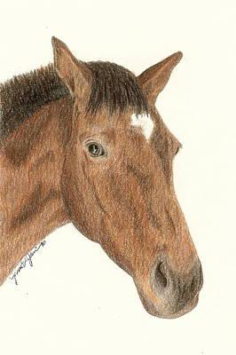 Drawing - Stuart by Jennie  Richards