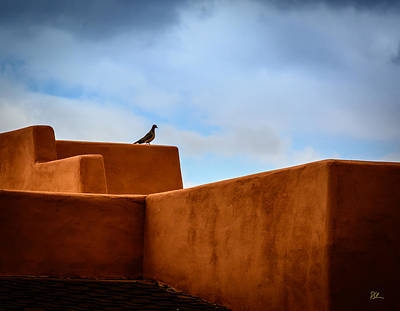 Photograph - Stucco Bird by Pat Scanlon