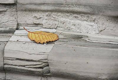 Photograph - Stuck On You by Bob VonDrachek