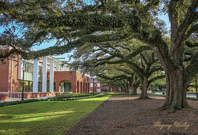 Photograph - Student Union Oaks by Gregory Daley  MPSA