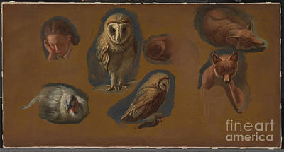 Painting - Studies Of A Fox A Barn Owl  A Peahen And The Head Of A Young Man by Celestial Images