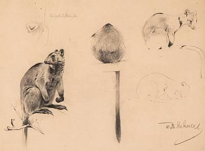 Kangaroo Painting - Studies Of A Tree Kangaroo by MotionAge Designs